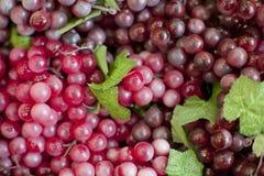 Ny frukt, druvor Royaltyfria Foton