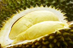 Ny frukt, Durian royaltyfria bilder