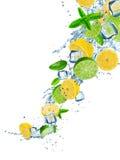 Ny frukt i vattenfärgstänk över vit Arkivbild