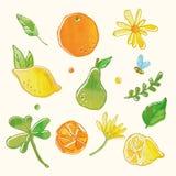 Ny frukt och blom- teckningsdiagram Vektor Illustrationer