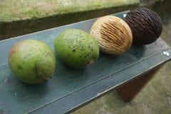 ny frukt och guavafrukt arkivbild