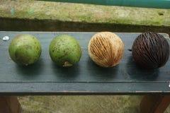 ny frukt och guavafrukt arkivfoto