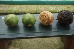 ny frukt och guavafrukt stock illustrationer