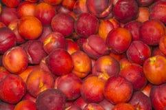 ny fruktgrupp Royaltyfria Bilder