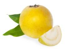 ny fruktguava Fotografering för Bildbyråer