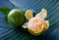 ny fruktorange Fotografering för Bildbyråer