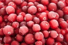 Ny fryst röd cranberry arkivbilder