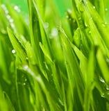 ny gräsgreen Royaltyfri Foto