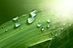 ny gräsgreen för droppe Arkivfoton