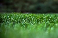 ny gräsgreen arkivfoton