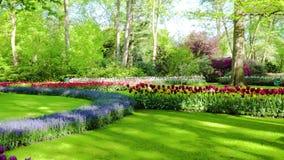 Ny gräsmatta med blommor stock video