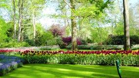 Ny gräsmatta med blommor lager videofilmer