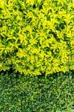 Ny gräsplan lämnar bakgrund Royaltyfria Foton