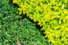 Ny gräsplan lämnar bakgrund Royaltyfria Bilder
