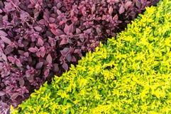 Ny gräsplan lämnar bakgrund Royaltyfri Bild