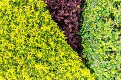 Ny gräsplan lämnar bakgrund Royaltyfri Foto
