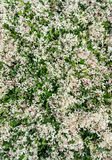 Ny gräsplan lämnar bakgrund Fotografering för Bildbyråer
