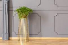 Ny gräsplan lade in växten som förlades på guld- ställning för metall i grå färgrum Royaltyfri Foto