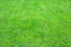 Ny gräsplan manicured gräsmattaslut upp Fäst ihop bakgrund för grönt gräs arkivfoto