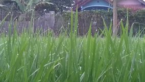 Ny gräsväxt Royaltyfri Foto