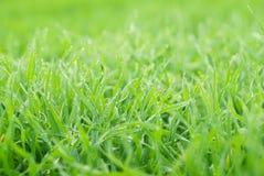 Ny grön äng arkivfoto