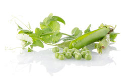 ny grön ärtafröskida Fotografering för Bildbyråer