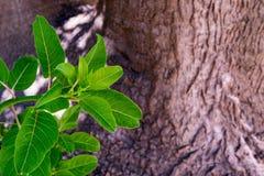Ny grön buske royaltyfri fotografi