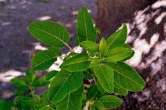 Ny grön buske royaltyfri bild