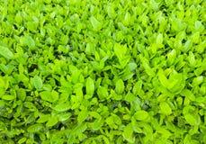 Ny grön buskebakgrund Arkivfoto