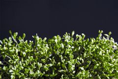 Ny grön cuckooflowerslättbakgrund Arkivfoton