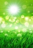 Ny grön förnimmelse Fotografering för Bildbyråer