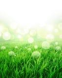 Ny grön förnimmelse Arkivbild