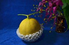 Ny grön frukt av melon, når att ha klippt Fotografering för Bildbyråer