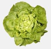 Ny grön grönsallat på vit bakgrund Arkivfoton