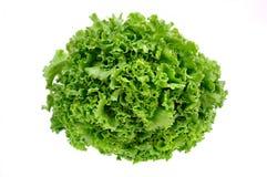 ny grön grönsallatwhite för bakgrund arkivfoton