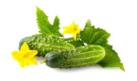 Ny grön gurka med naturlig grönsakorg för blad och för blomma arkivfoton