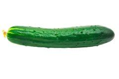 ny grön isolerad vegetarisk white för bakgrundsgurkamat Royaltyfria Foton
