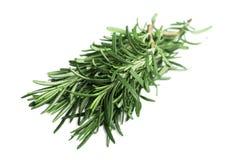Ny grön kvist av rosmarin som isoleras på en vit Royaltyfri Fotografi