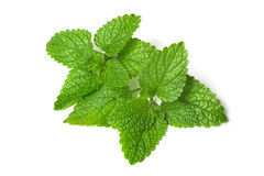 ny grön leafMelissa Arkivfoton
