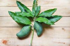 Ny grön mango och gröna sidor på trärå sommarfrukt för bakgrund/för skördmango royaltyfri bild