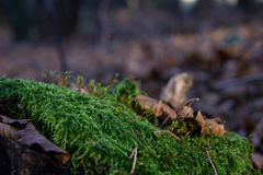 ny grön moss Royaltyfri Bild