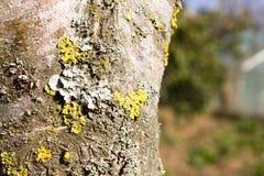 Ny grön mossa på en trädstam Royaltyfria Bilder