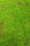 Ny grön mossbakgrund Arkivbilder