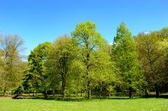 Ny grön ny vårlövverk på träd Arkivfoton