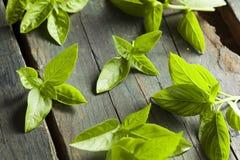 Ny grön organisk basilika Royaltyfri Foto