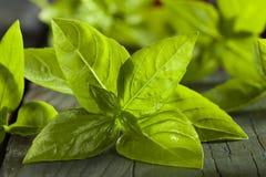 Ny grön organisk basilika Royaltyfria Bilder
