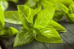 Ny grön organisk basilika Arkivbilder