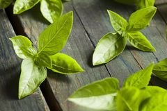 Ny grön organisk basilika Arkivfoto