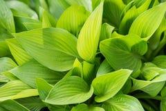 Ny grön pöl Royaltyfria Foton