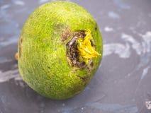 Ny grön rädisa på en grå prickig bakgrund royaltyfri foto